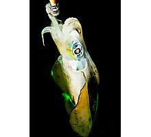 Squid Photographic Print