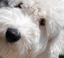 OES puppy Sticker