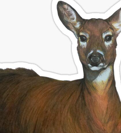 Whitetail Doe Sticker