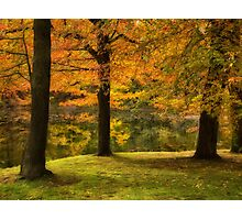 Trees in Autumn Photographic Print