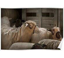 Animal - Sheep - The Order Poster