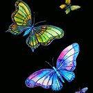 Butterfly Magic by Linda Callaghan