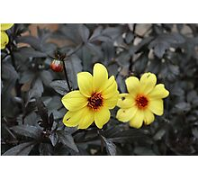 Yellow Flower Photographic Print