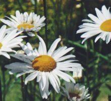daisy patch Sticker