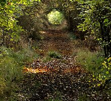 Woodland Tunnel  by Fay Freshwater