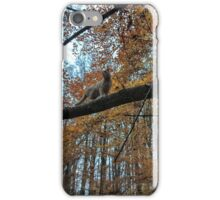 The Cat in the Tree iPhone Case/Skin