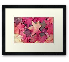 Autumn leaves rainbow of colours Framed Print