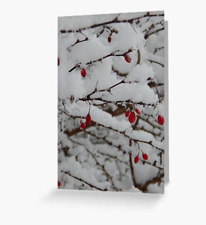 Berries on Snow Greeting Card