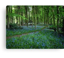 Bluebell Forest, East Sussex Canvas Print