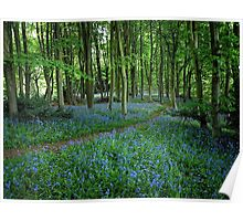 Bluebell Forest, East Sussex Poster