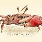 Fiddler Crab by Eric Fan