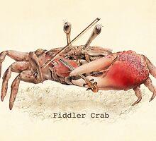 Fiddler Crab by Eric Fan