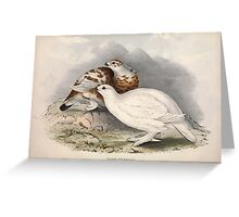John Gould The Birds of Europe 1837 V1 V5 255 Willow Ptarmigan Greeting Card