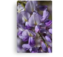 Spring Is Wisteria Canvas Print