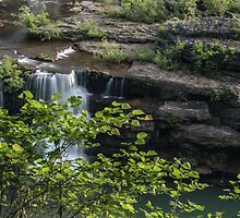 Rock Island State Park by pchelptips