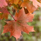 Fall Color by rrushton