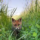 Red Fox kit by Remo Savisaar