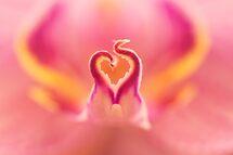 Pretty in Pink by Lindie Allen