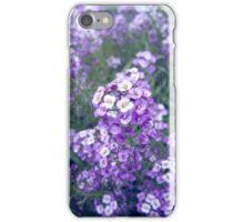 Purple Sweet Alyssum iPhone Case/Skin