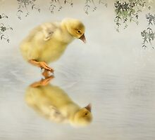 Reflection of a Gosling by littlecritters