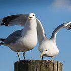 Gulls Friendship by JonnisArt