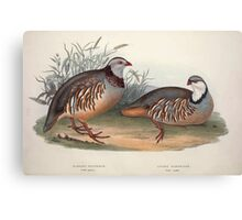 John Gould The Birds of Europe 1837 V1 V5 261 Barbary and Greek Partridge Canvas Print