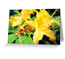 wild golden rhododendron 1 Greeting Card