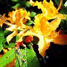 wild golden rhododendron 2 by LoreLeft27