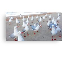 It's a Gull Party Canvas Print