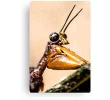 Bug Portrait Canvas Print