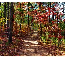 Kentucky Trail Photographic Print