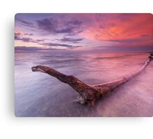 Driftwood in colorful sunset scenery at lake Huron Ontario art photo print Canvas Print