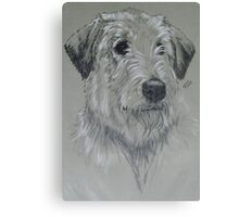 Irish Wolfhound Canvas Print