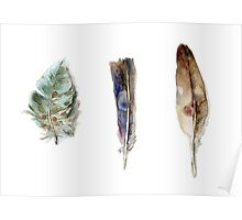 Feather watercolor blue green brown Poster