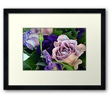 Purple and pink roses closeup  Framed Print