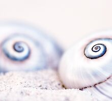 Snail shell III by artsandsoul