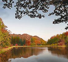 Autumn Trees . by Irene  Burdell