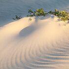 The Sandstorm... by Angelika  Vogel
