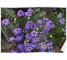 Brachyscome iberidifolia Poster