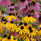Late Summer Blooms by lorilee