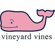 Vineyard Vines Photographic Print