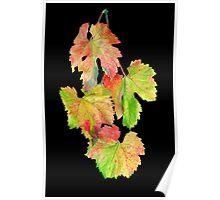 Autumn Grape Leaves Poster