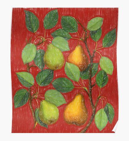 Italian Pears Sketch Poster