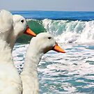 Together by the Sea  by Heather Friedman