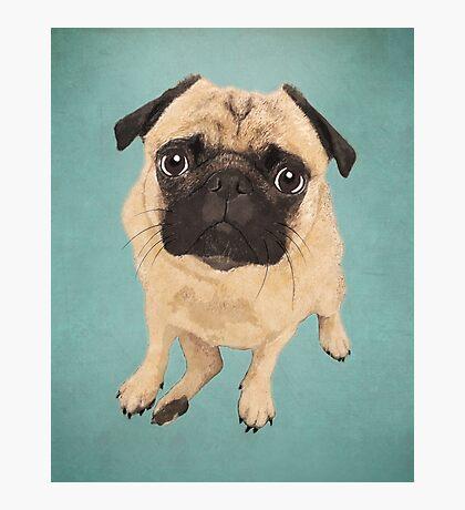 Pug Dog Portrait Photographic Print