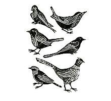 Bird Collection Lino Prints Photographic Print