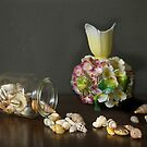 Aussie Shells & Antique Porcelain by Gilberte