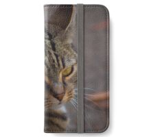 tabby iPhone Wallet/Case/Skin