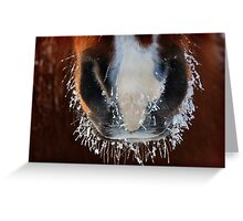 Horse Snout Greeting Card