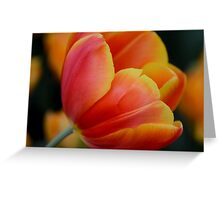 red and yellow Greeting Card